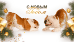 Dog-Food — мясо для собак Москва